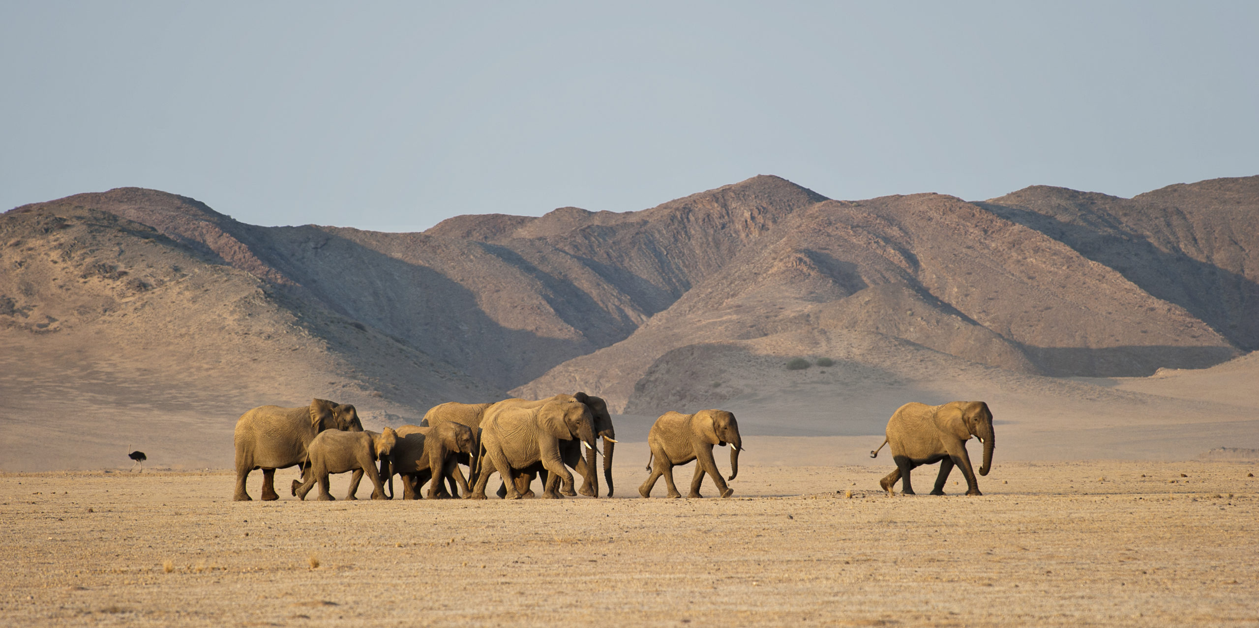 Elephants Namibia