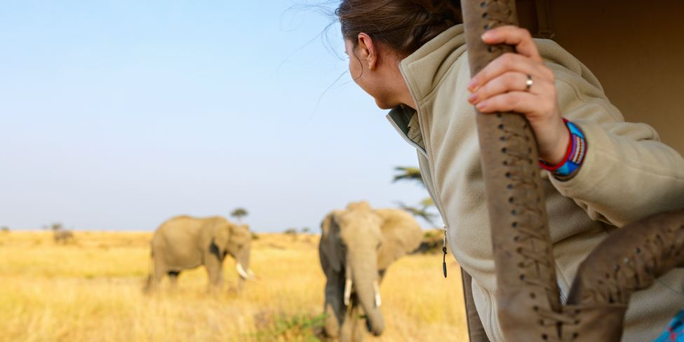 Person in Open-sided safari vehicle looks at two African elephants on dry grassy savanna